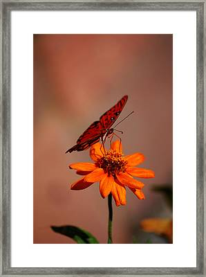 Orange Butterfly Orange Flower Framed Print by Lori Tambakis