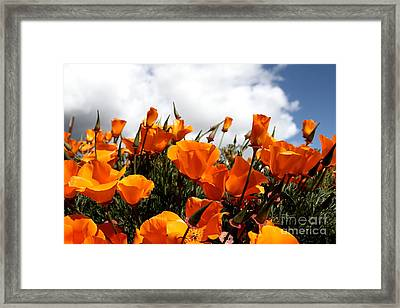 Orange California Poppy . 7d15016 Framed Print by Wingsdomain Art and Photography