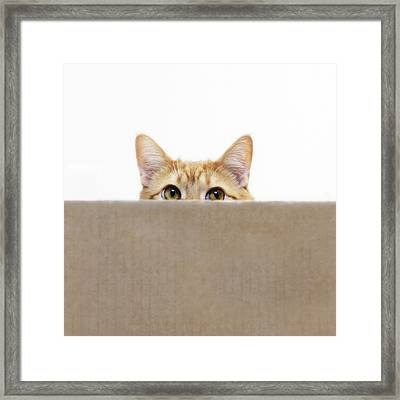 Orange Cat Peeping Out From Cardboard Box Framed Print by Kevin Steele