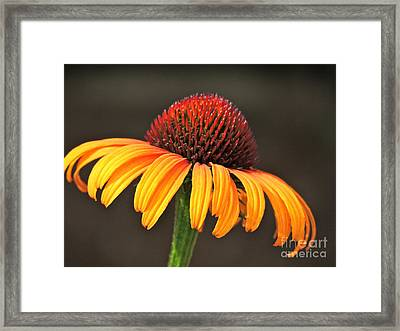 Framed Print featuring the photograph Orange Crown by Eve Spring