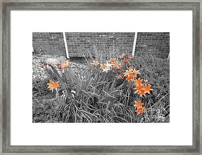 Orange Day Lilies. Framed Print by Ausra Huntington nee Paulauskaite