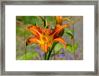 Framed Print featuring the photograph Orange Day Lily by Tikvah's Hope