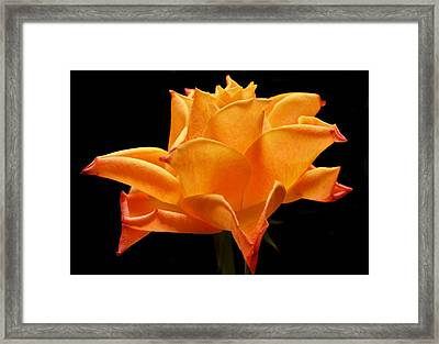 Orange Delight Framed Print by Terence Davis