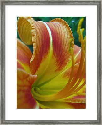 Orange Delight Framed Print by Todd Sherlock
