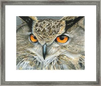 Orange-eyed Owl Framed Print