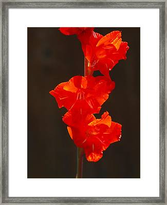 Orange Fire Framed Print by Jim Moore