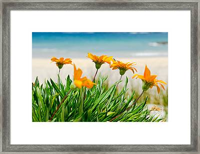 Orange Flowers On The Sunny Ocean Beach. Framed Print