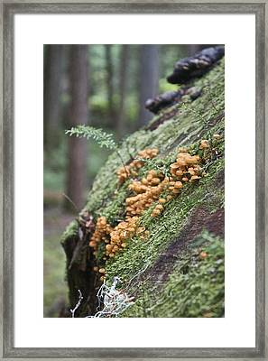 Framed Print featuring the photograph Orange Fungi by Sylvia Hart