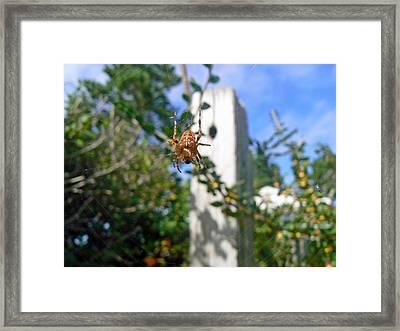 Orange Garden Spider And Fly Framed Print by Pamela Patch