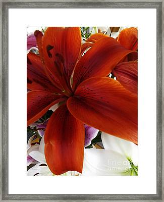 Framed Print featuring the photograph Orange Glow by Gary Brandes