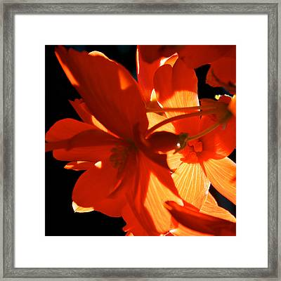 Framed Print featuring the photograph Orange Glow by Trever Miller