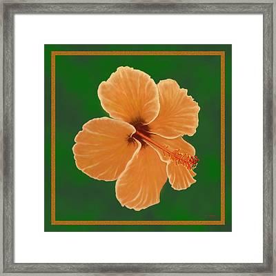 Orange Hibiscus Framed Print by Tim Stringer
