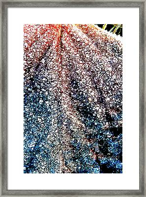 Framed Print featuring the photograph Orange Is Warm And Blue Is Cold by Steve Taylor