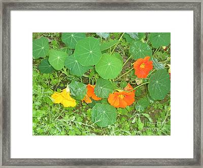 Orange Ivy Framed Print