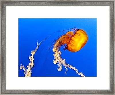 Orange Jellyfish Framed Print