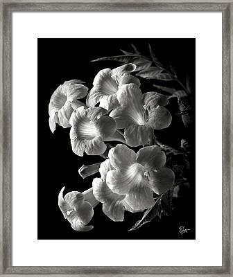 Orange Jubilee In Black And White Framed Print