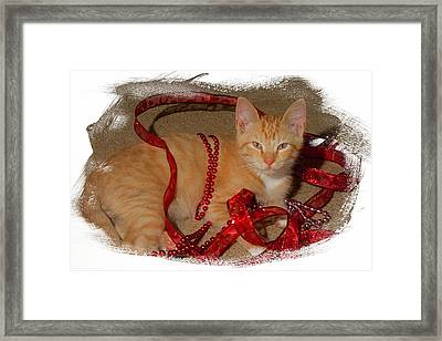 Orange Kitten With Red Ribbon Framed Print
