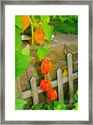 Framed Print featuring the photograph Orange Lanterns by Joan McArthur