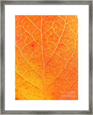 Orange Leaf Abstract Framed Print by Mariah Stone