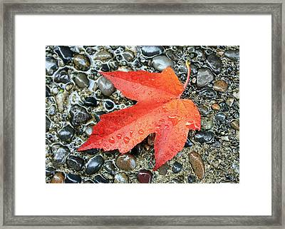 Orange Leaf Framed Print by Gerry Bates