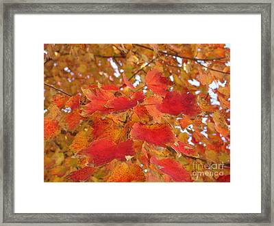 Orange Leaves 4 Framed Print