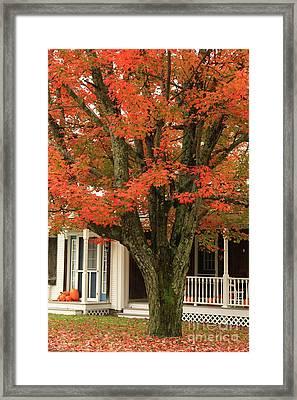 Orange Leaves And Pumpkins Framed Print by Deborah Benoit
