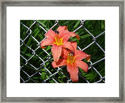 Framed Print featuring the photograph Orange Lilly And Dewdrops by Frank Wickham
