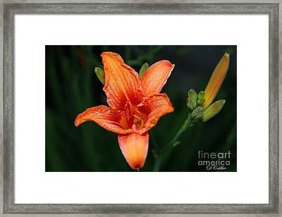 Framed Print featuring the photograph Orange Lily by Davandra Cribbie