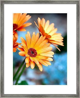 Framed Print featuring the photograph Orange Mood by Anna Rumiantseva
