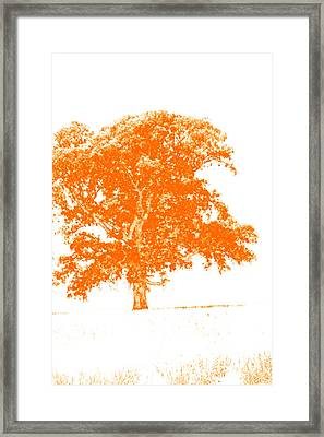 Orange Oak Framed Print by Alan Look