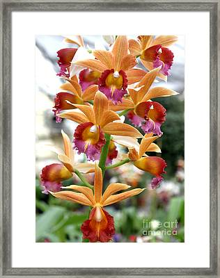 Framed Print featuring the photograph Orange Orchids by Debbie Hart