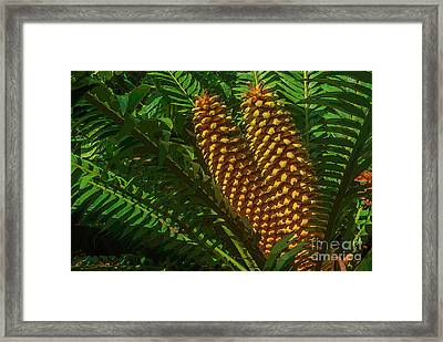 Orange Palm Hearts Framed Print by Herb Paynter