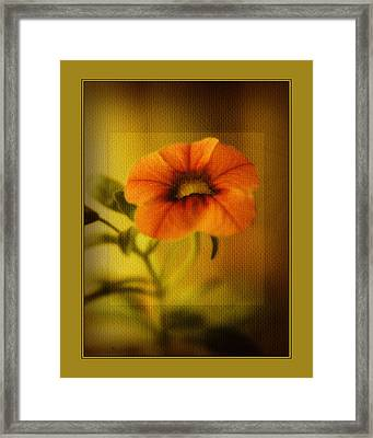 Orange Pansy Framed Print by Bonnie Bruno