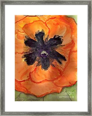 Orange Poppy Framed Print by Debbie Wassmann