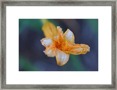 Framed Print featuring the photograph Orange Sickle by Tanya Tanski