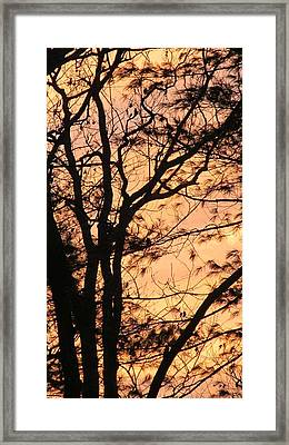 Orange Silhouette Framed Print
