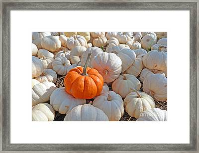 Framed Print featuring the photograph Orange Solo by Louise Peardon