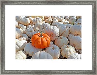 Orange Solo Framed Print by Louise Peardon