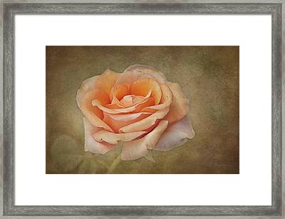 Orange Sorbet Framed Print by Cheryl Davis