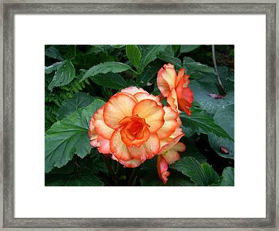 Orange Spectacular Framed Print