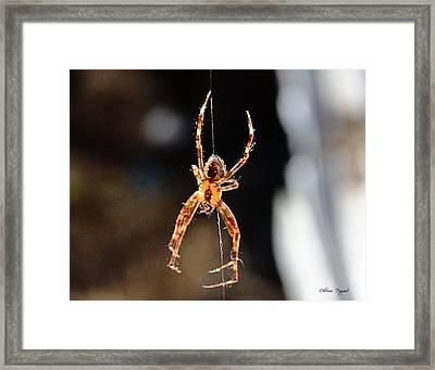 Orange Spider Framed Print