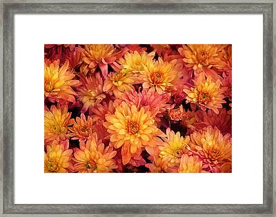 Orange Spring Flowers Background Framed Print by Angela Waye