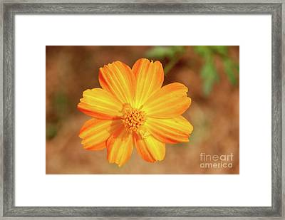 Orange Surbert Framed Print