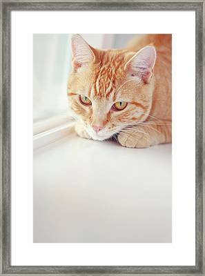 Orange Tabby Cat On White Window Sill Framed Print by Kellie Parry Photography