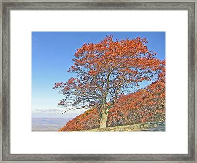 Framed Print featuring the photograph Orange Tree And Blue Sky by Shirin Shahram Badie