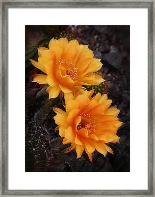 Orange You Beautiful  Framed Print by Saija  Lehtonen