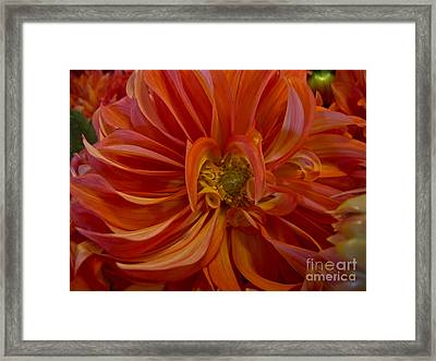Orange You Happy Framed Print by Arlene Carmel