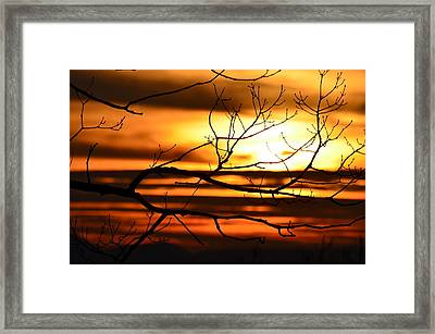 Orange Zest Framed Print