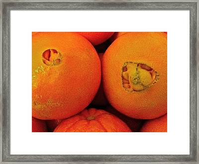 Framed Print featuring the photograph Oranges by Bill Owen