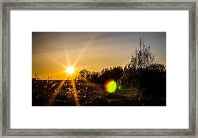 Framed Print featuring the photograph Orangina by Matti Ollikainen